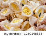 sandalwood flower for funerals... | Shutterstock . vector #1260148885