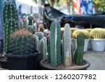 close up of cactus in the pot... | Shutterstock . vector #1260207982