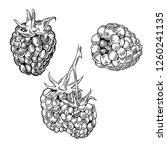 illustration set of drawing... | Shutterstock .eps vector #1260241135