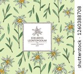 background with edelweiss ... | Shutterstock .eps vector #1260388708
