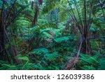 rain forest in hawaii volcanoes ... | Shutterstock . vector #126039386