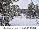 ski trail in snowy forest | Shutterstock . vector #1260491518