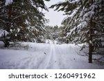 ski trail in snowy forest | Shutterstock . vector #1260491962