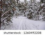 ski trail in snowy forest | Shutterstock . vector #1260492208