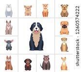 set of happy doggies portraits  ... | Shutterstock . vector #1260574222