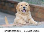 Stock photo cute golden retriever puppy 126058058