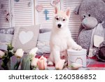 cute dog posing for a photo... | Shutterstock . vector #1260586852