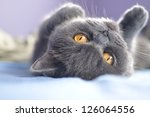 Stock photo cute kitten playing on the bed 126064556