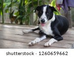thai dog on wooden table | Shutterstock . vector #1260659662