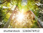 sunny morning in the tropical... | Shutterstock . vector #1260676912