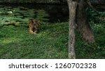 safari marine park in bali | Shutterstock . vector #1260702328
