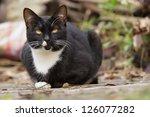 Stock photo cat 126077282