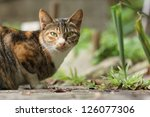 cat | Shutterstock . vector #126077306