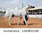 the arabian horse | Shutterstock . vector #1260802108