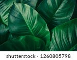 tropical leaves  dark green... | Shutterstock . vector #1260805798