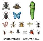 different kinds of insects... | Shutterstock .eps vector #1260954562