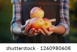 farmer's hands are holding some ... | Shutterstock . vector #1260980608