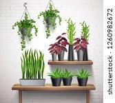 house plants realistic white... | Shutterstock .eps vector #1260982672