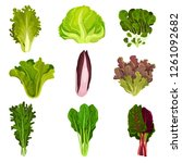collection of fresh salad... | Shutterstock .eps vector #1261092682
