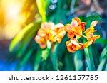 Colorful Orchids Floral Flower Blurred - Fine Art prints