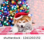Akita Inu Puppy In Red Santa...