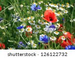 Wildflower Meadow With Poppies