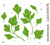 parsley. green parsley leaves.... | Shutterstock .eps vector #1261334578