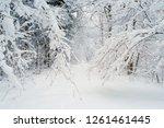 snowy winter forest alley. tree ... | Shutterstock . vector #1261461445