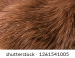 Texture Of Natural Fur Of A Re...