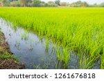 beautiful view of rural green... | Shutterstock . vector #1261676818