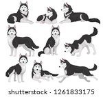 collection of siberian husky in ... | Shutterstock .eps vector #1261833175
