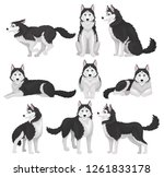 siberian husky set  white and... | Shutterstock .eps vector #1261833178