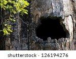 Big Hollow Tree In Zoo