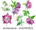 set of purple hellebore flowers ... | Shutterstock . vector #1261950922
