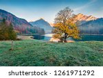 lonely golden tree on the... | Shutterstock . vector #1261971292
