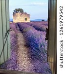 landscape of provence with... | Shutterstock . vector #1261979542