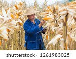 asian farmer or biologist... | Shutterstock . vector #1261983025