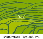 Tea Plant Fields. Vector Tea...