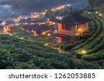 The  Tea Fields With Fog In The ...