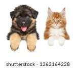 Stock photo happy puppy and kitten above banner isolated on white background 1262164228
