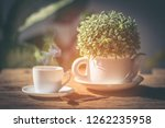 coffee espresso cup white with... | Shutterstock . vector #1262235958