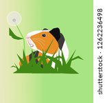 the guinea pig. green lawn... | Shutterstock . vector #1262236498