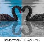 black swan | Shutterstock . vector #126223748