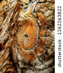 Small photo of Old knotty wood surface detail