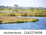 scenic view of a marsh at... | Shutterstock . vector #1262276908