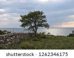 coastal landscape with a... | Shutterstock . vector #1262346175