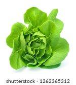 butter head lettuce vegetable... | Shutterstock . vector #1262365312