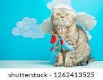 Angel Cupid Scottish Cat With...