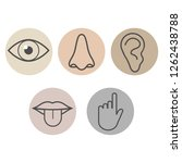 human senses icon. vector... | Shutterstock .eps vector #1262438788