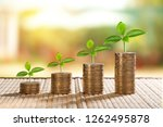 coins and money growing plant...   Shutterstock . vector #1262495878